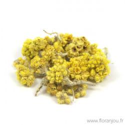 IMMORTELLE Fleur jaune
