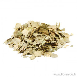 CHATAIGNIER feuille