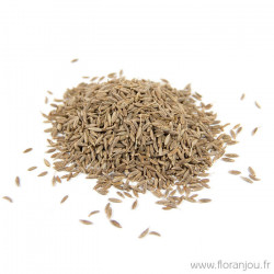 Cumin fruit